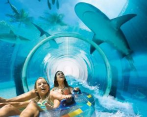 water theme park with animals