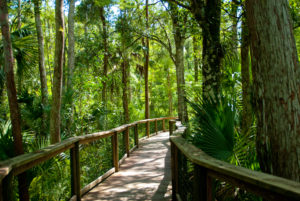 Nature Walks in Florida are relaxing