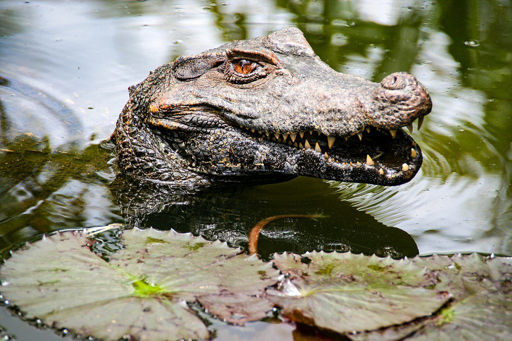 wildlife attractions in Cancun