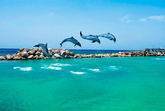 kids dolphin excursions