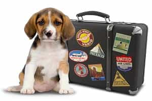 Disney World packing list pet basics