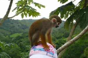 Monkey Attractions In Punta Cana