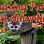 Best Punta Cana Activities