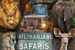 See Wild Animals At Animal Kingdom