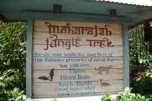 Maharajah Jungle Animal Kingdom