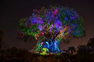 Tree Of Life Nighttime